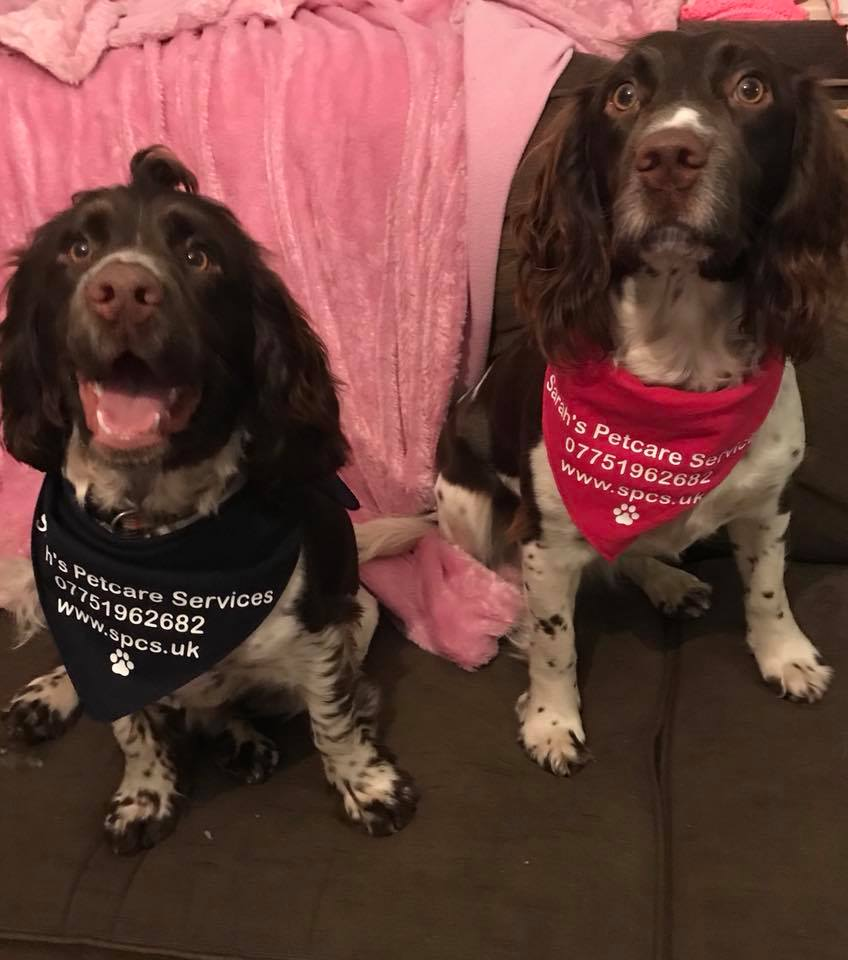 2 Dogs wearing Sarah's Pet Care Services the local Oakham, Rutland & Stamford bandannas